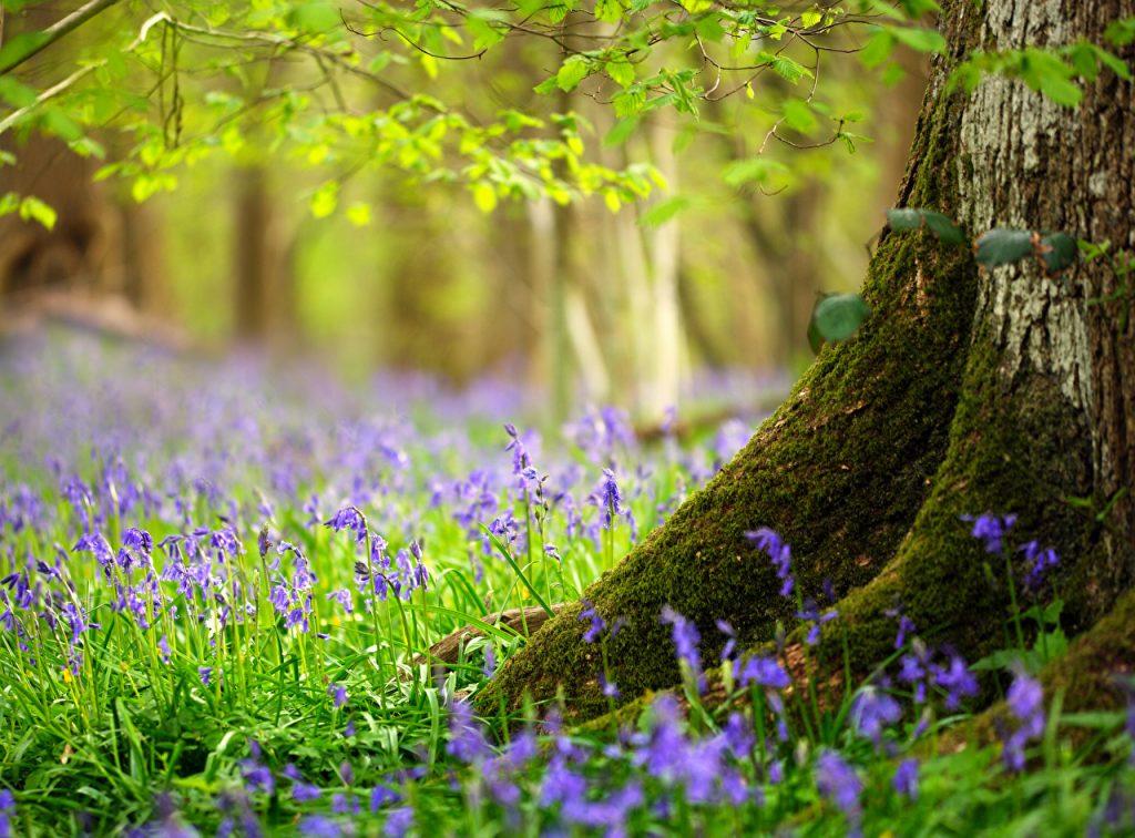 Spring_Trees_Grass__SoftAirSeat